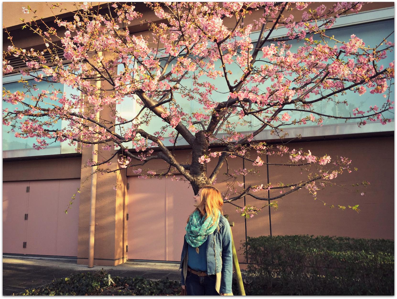 Tokyo neighborhood guide
